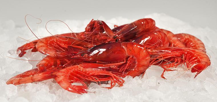La majestuosa gamba roja mediterránea.